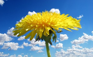 flower-1344317_1920.jpg